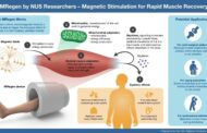 Using a magnetic field to speed up muscle recovery