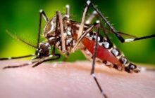 Birth control for mosquito populations