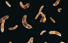 Genes that control the process of whole-body regeneration