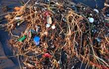 The bacteria that produce ten percent of the oxygen we breathe are susceptible to plastic pollution