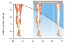 Can muscle decline due to aging be suppressed or even stopped?