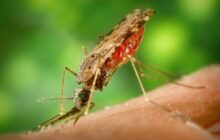 A neurotoxin that isn't harmful to any living thing except Anopheles mosquitoes that spread malaria