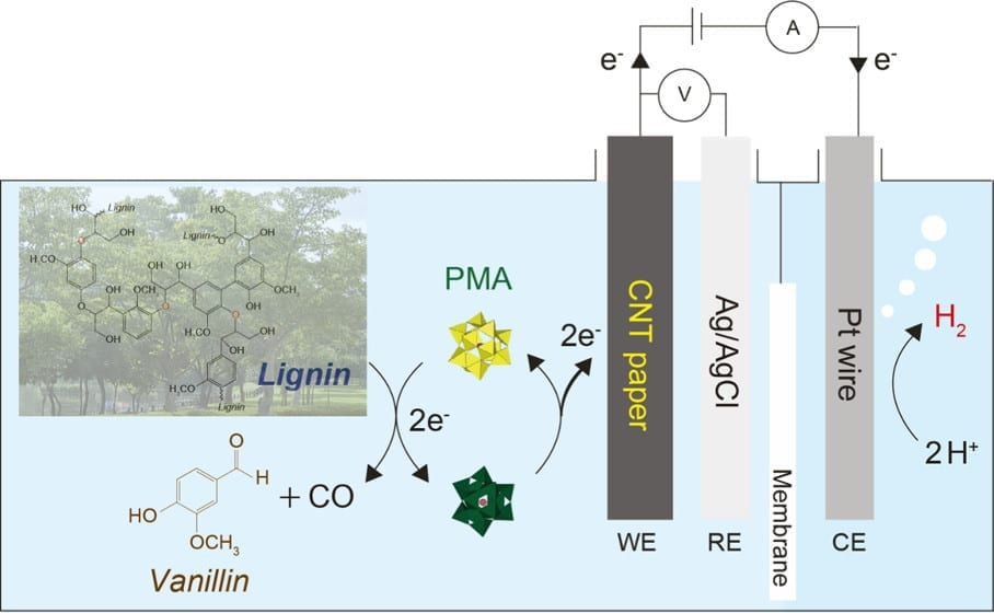 Schematic diagram of byproduct production and hydrogen evolution through lignin decomposition.