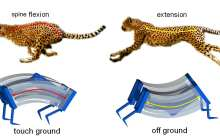 The world's fastest soft robots inspired by cheetahs