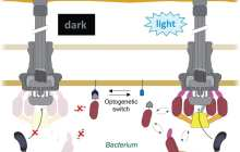 A bacterial injection system controlled by light
