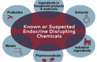 Evidence of hormone disruptor chemical threats grows