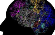 Engaging the whole brain for the first time with a new form of brain analysis