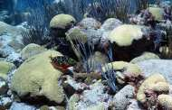 Halting ocean coral bleaching by pumping cold water from the deep?