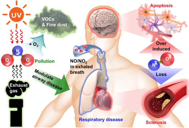 Researchers say that a flexible and implantable sensor that can monitor various forms of nitric oxide (NO) and nitrogen dioxide (NO2) gas is important because these gases can significantly impact human health IMAGE: Penn State