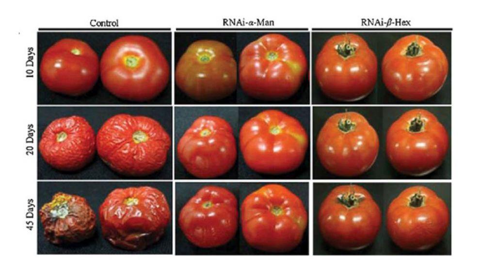 Modern Genetically Modified Organisms (GMO's)