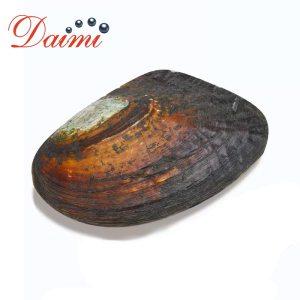 PRESALE DAIMI Open Pearl Mussel Random Pearl One on One Open Oyster Live Stream Innrech Market.com