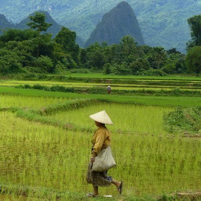 Risaie del Laos