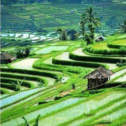 Escursioni Indonesia