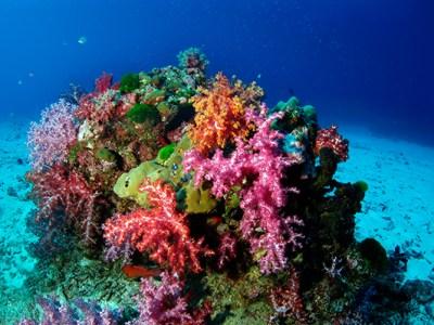 Coralli nella Barriera Corallina delle Similan Island