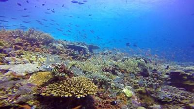 snorkeling amed