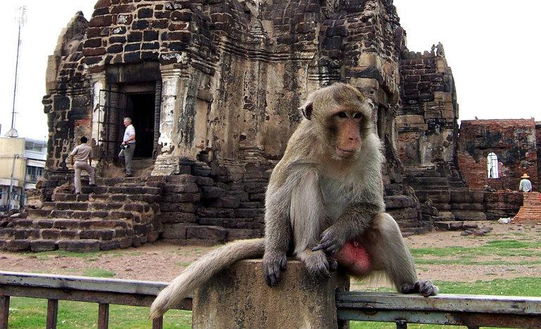 Il tempio delle scimmie di Lopburi
