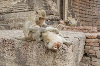Il tempio delle scimmie di Lopburi.