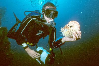 Immersione nelle acque dell'arcipelago di Palau