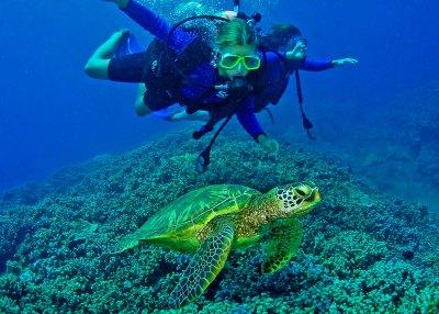tartarughe marine koh tarutao