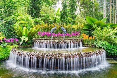 orchidee giardino botanico di singapore