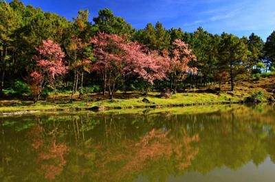 parco nazionale di doi inthanon chiang mai
