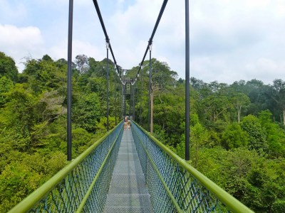 natura a singapore sul tree top walk