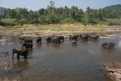 elefanti - thailandia