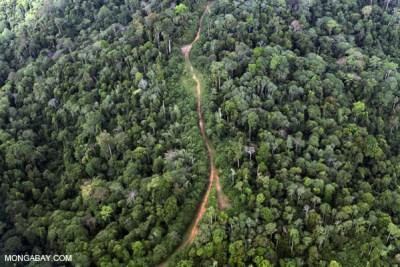La lussureggiante foresta del Borneo