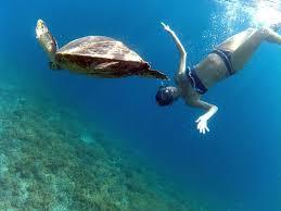 Tartaruga marina Gili Islands