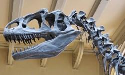 Grande scoperta in Thailandia: trovati i resti di un dinosauro dai denti da squalo