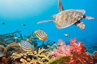 Bellissime tartarughe nei fondali di Dhaalu