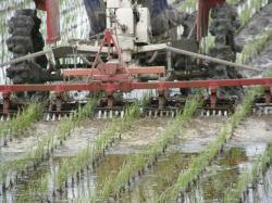 除草機や稲ワラの散布の機械を使用