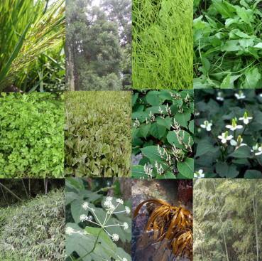 約30種類の野生の植物、海藻など