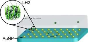 Cientistas querem engarrafar energia solar e turbinar fotossíntese das plantas