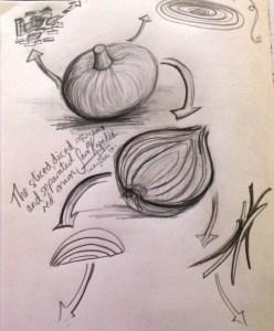 sliced, diced & separated red onion sketch, Sara Kapadia 7-