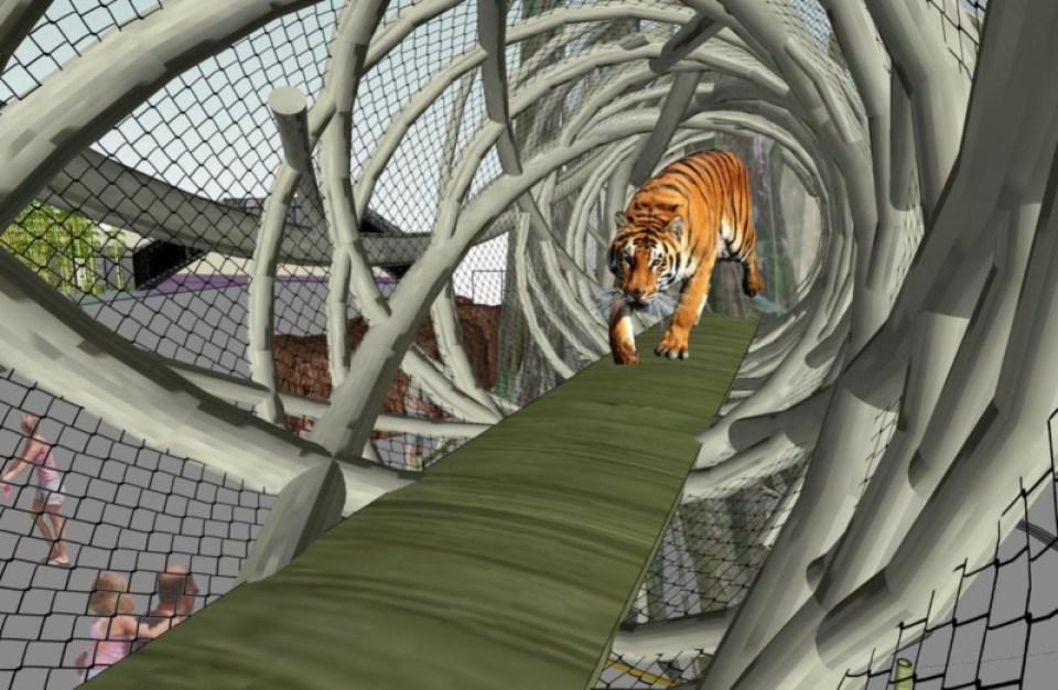 Tiger1