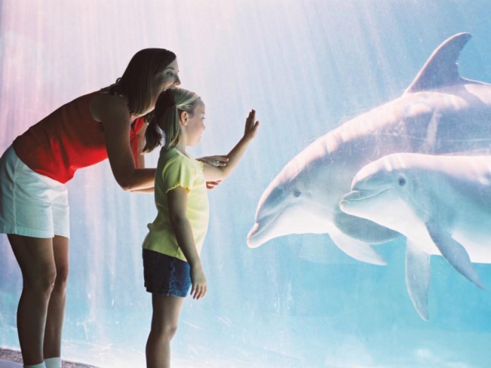 Dolphin Underwater Viewing 1