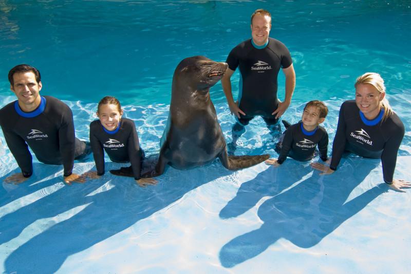 Discovery Point's Sea Lion Swim at SeaWorld San Antonio