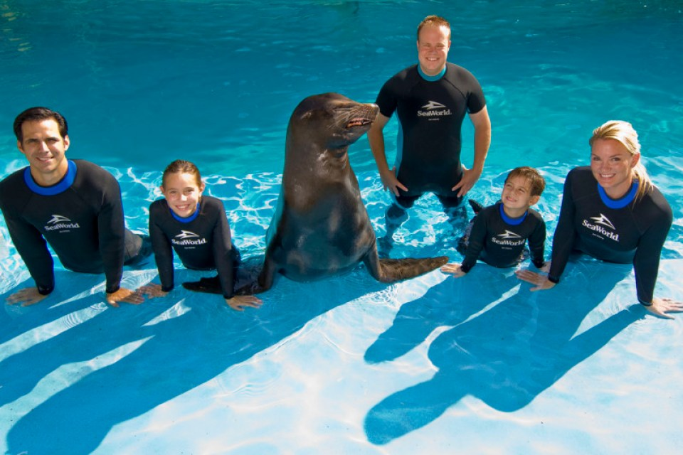 Discovery Point's Sea Lion Swim at SeaWorld San Antonio