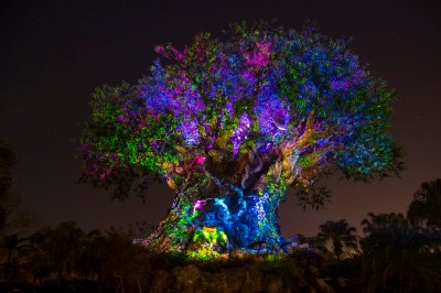 Disney's Animal Kingdom's iconic Tree of Life will undergo extraordinary ÒawakeningsÓ throughout each evening as the animal spirits are brought to life by magical fireflies that reveal colorful stories of wonder and enchantment. Projections of nature scenes take on a magical quality as they appear to dramatically emanate from within the Tree of Life. (David Roark, photographer)