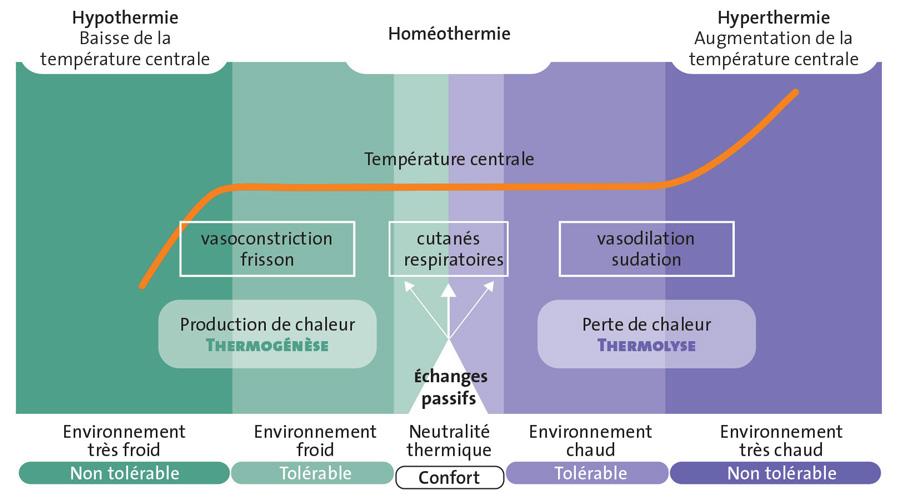 """Résultat de recherche d'images pour """"homéothermie"""""""""""