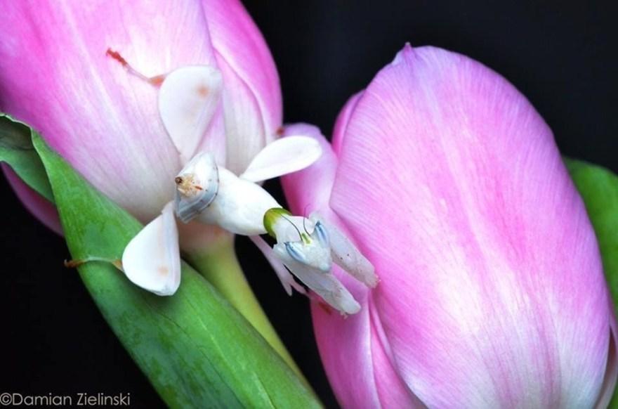 Damian Zielinski - Orchid