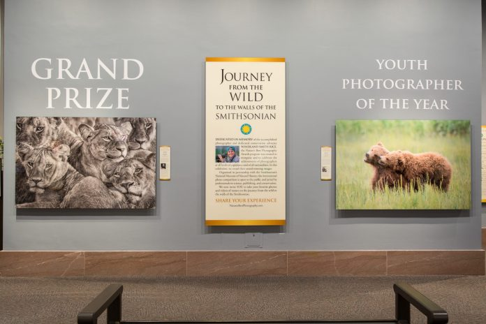 Lakshitha Karunarathna - African lionesses - Grand Prize winner of the 2017 Nature's Best Windland Smith Rice Awards