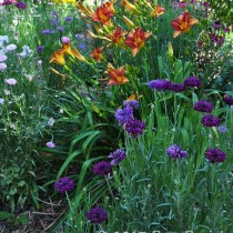 Daphne Jeffers Garden - pic by Pam Penick