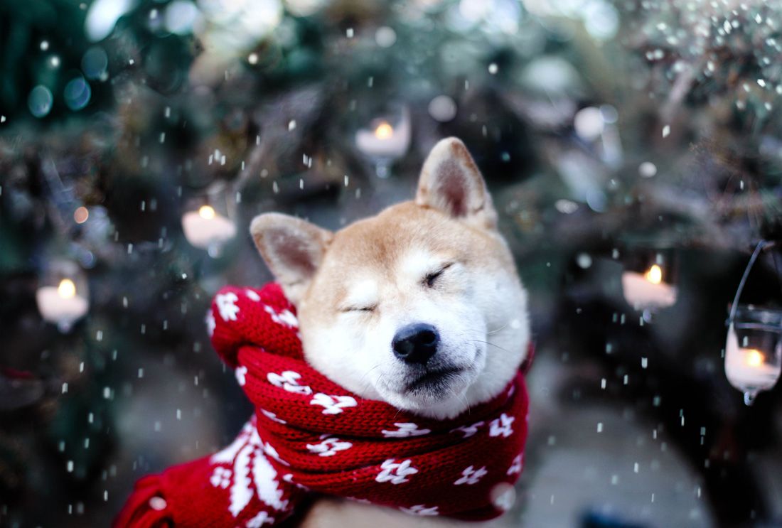 Image result for winter dog