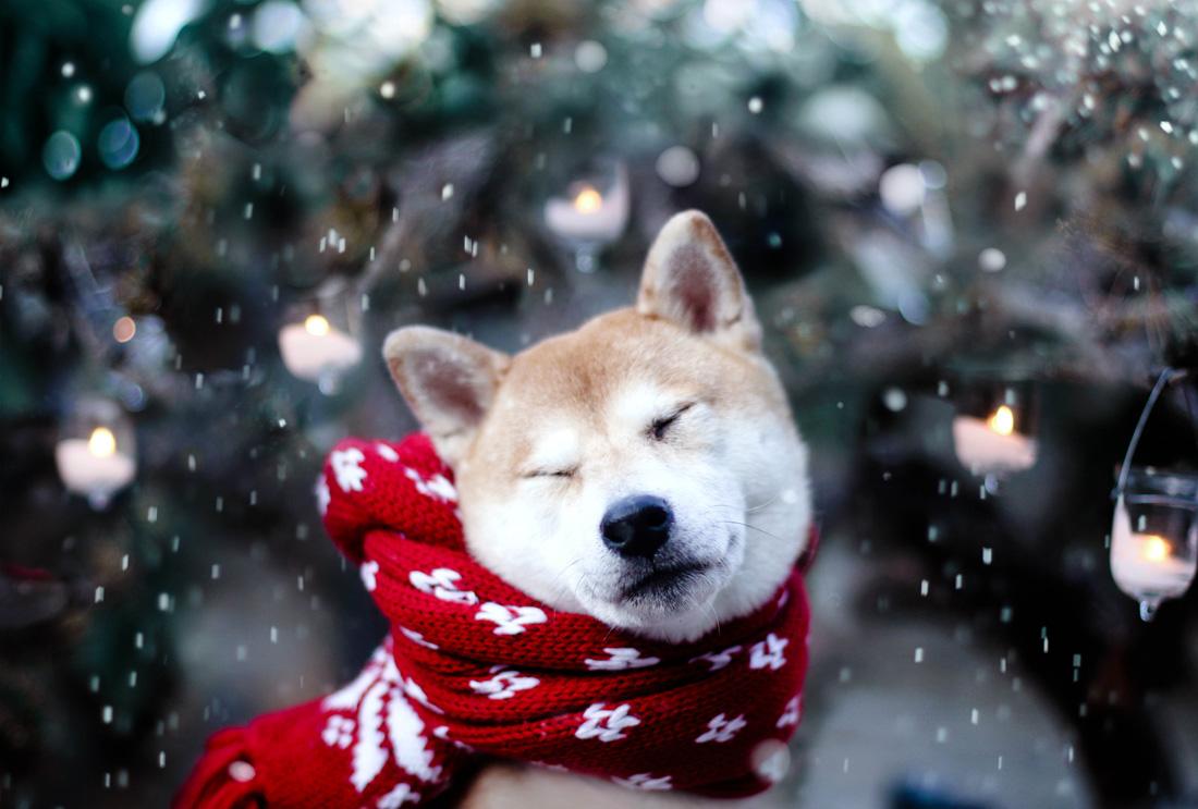 Image result for winter dog