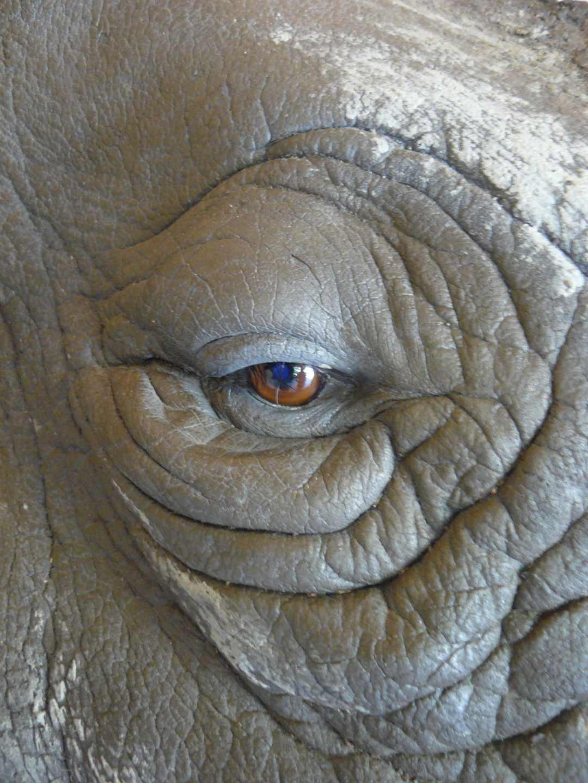 Modellen & Reconstructies | Neushoorn detail | Safaripark Beekse Bergen
