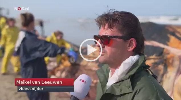 VIDEO Vinvis Texel | NOS Journaal