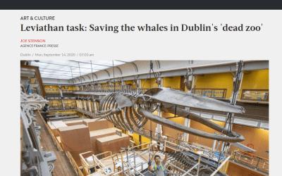 The Jakarta Post | demontage skelet bultrug | National Museum of Ireland –  Natural History | Dublin (IRL)