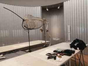 """Skeletten   demontage skelet paard """"Eclipse""""   tentoonstelling George Stubbs Mauritshuis ism Naturalis"""